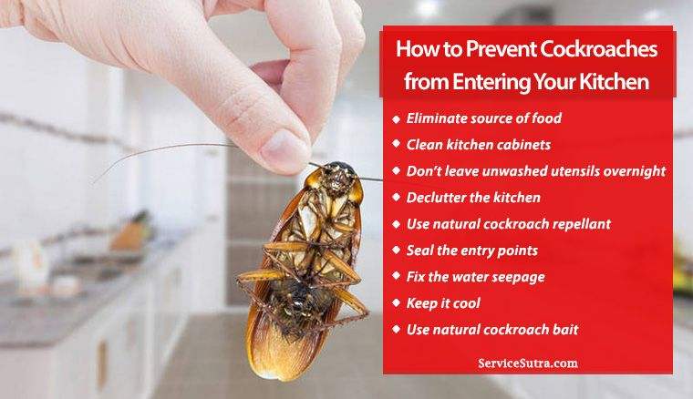 How to Prevent Cockroaches from Entering Your Kitchen ...