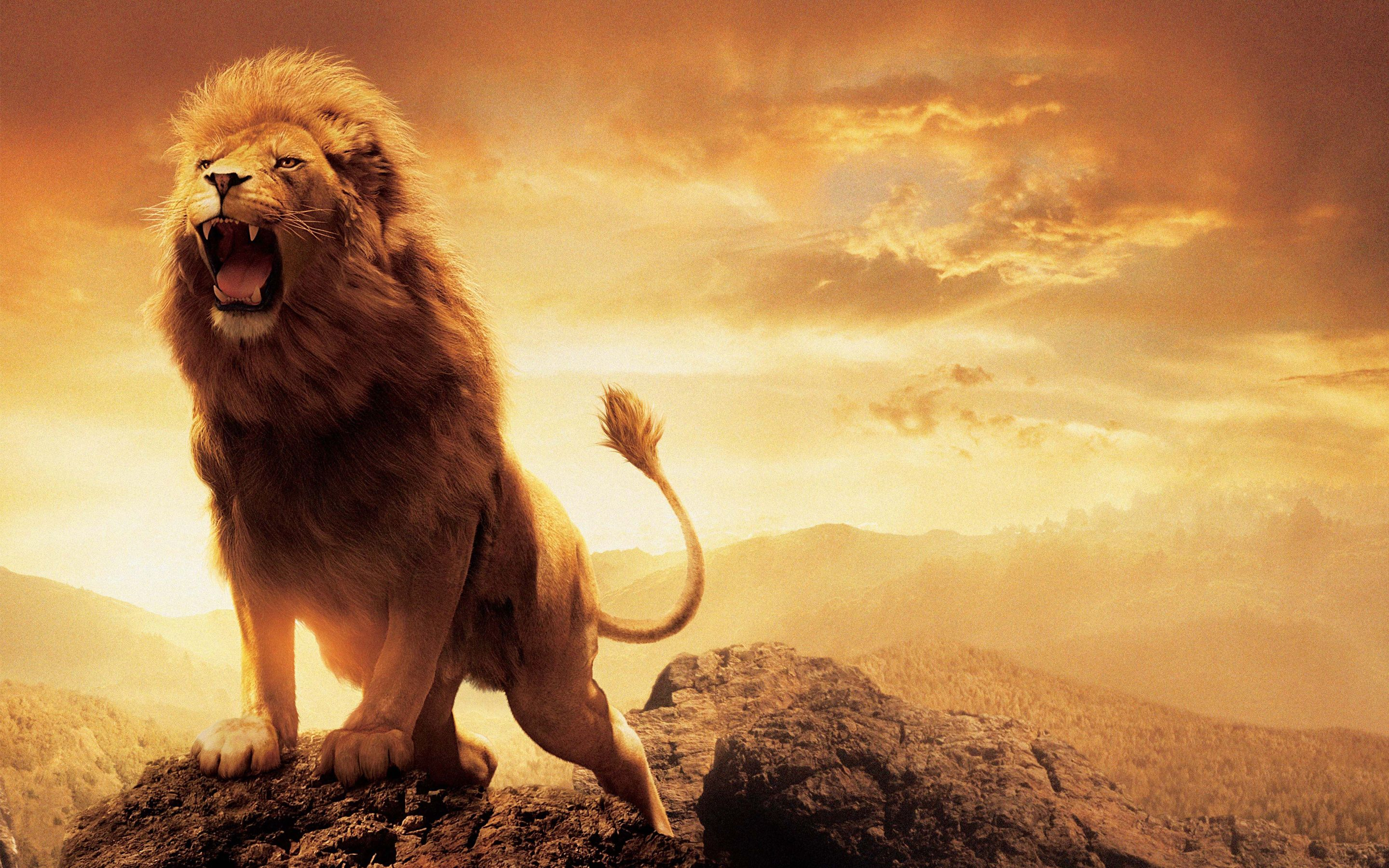 Pin By Hd Wallpapers On Hd Wallpapers Lion Wallpaper Lion Narnia
