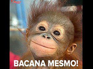 Imagens Para Whatsapp Fotos Com Frases Engraçadas Macacos
