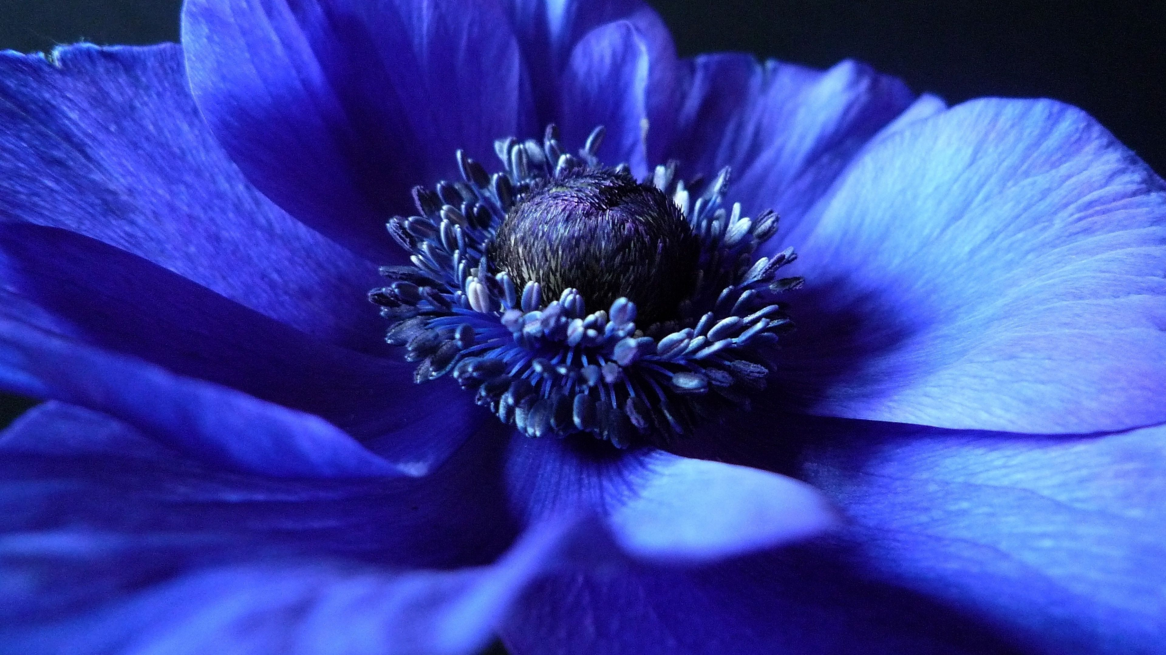 macro hd wallpaper ultra blue - photo #11