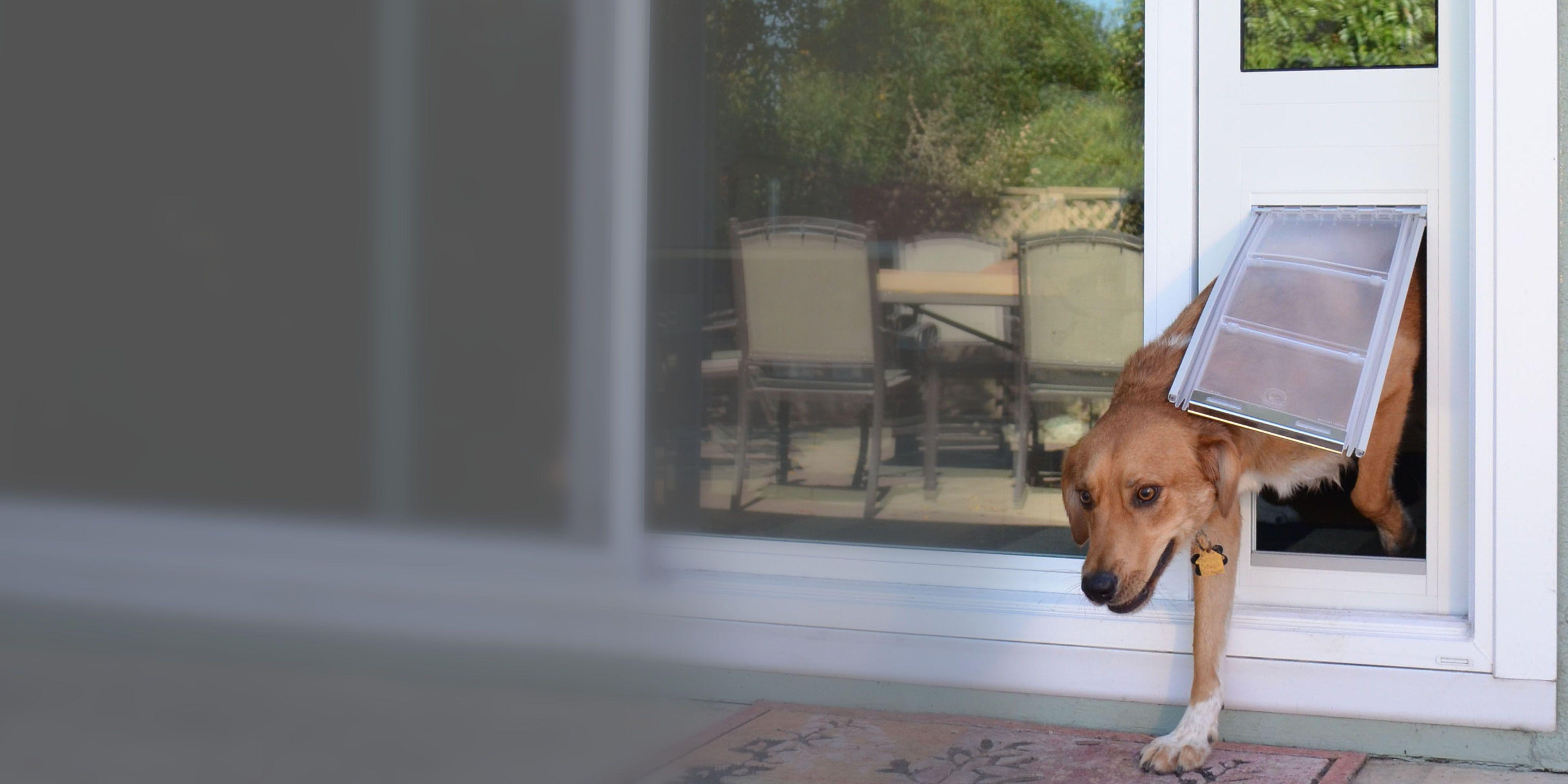 Endura Flap Sliding Glass Dog Door New Endura Flap Pictures We