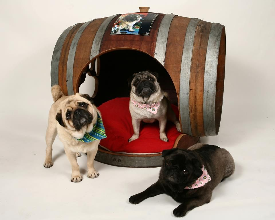 Barrel Of Pugs Habitat Inspired By The Pug Wine Pugs For The
