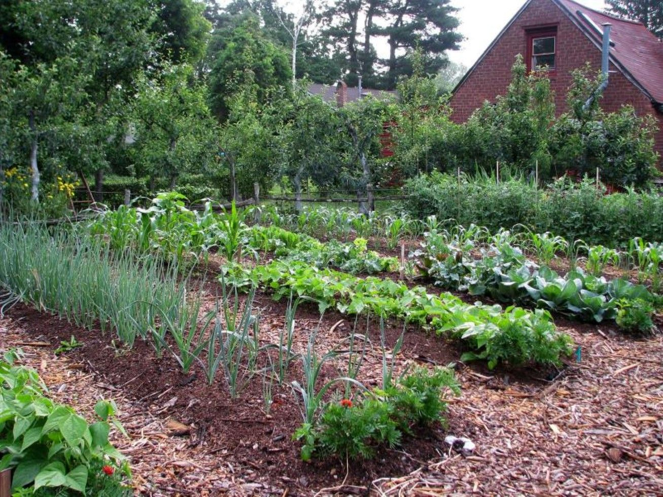 Good Cool Vegetable Garden Ideas Part - 10: Wooden Fence With Mounted Plant Bed Feat Cool Vegetable Garden For .