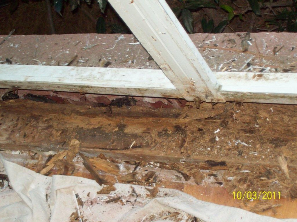 Termites Feeding In Window Sill Water Damage Window Frame