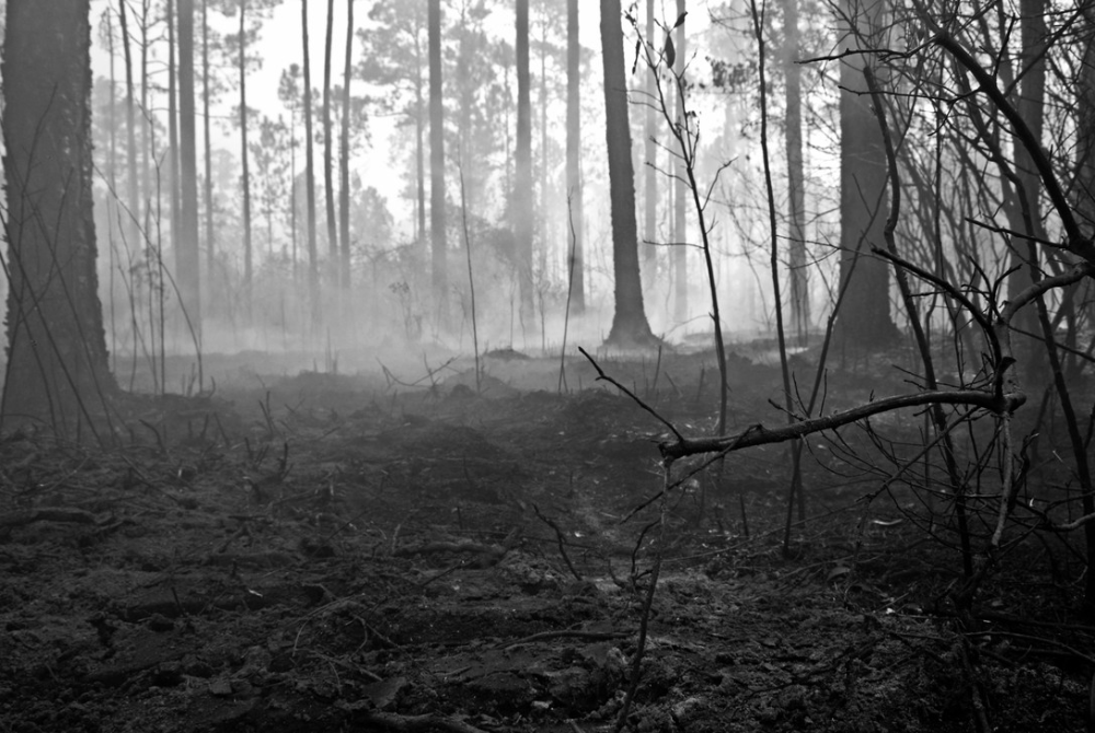 Smoke rises from the floor of the burnt forest floor on