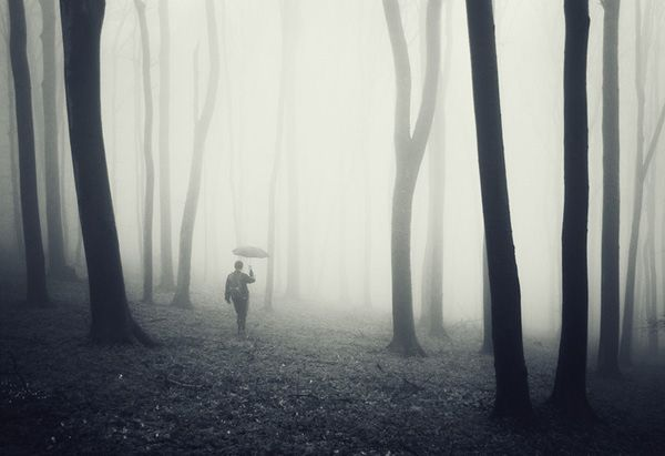Man in a Fog and Forest with an Umbrella | forest1.jpg (600×411)