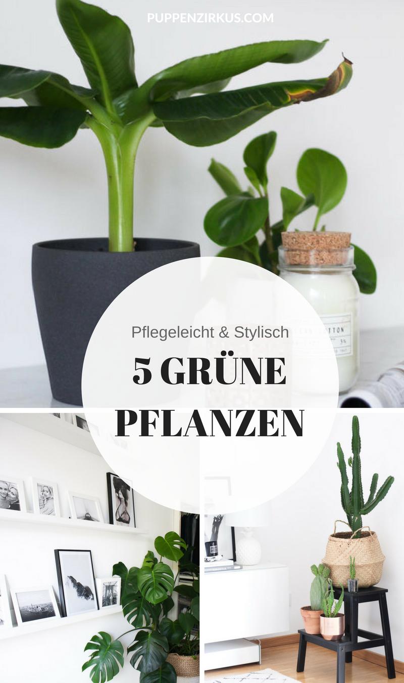 Einzigartig Grüne Pflanzen Sammlung Von Ein E Ohne Wäre Für Mich Kein