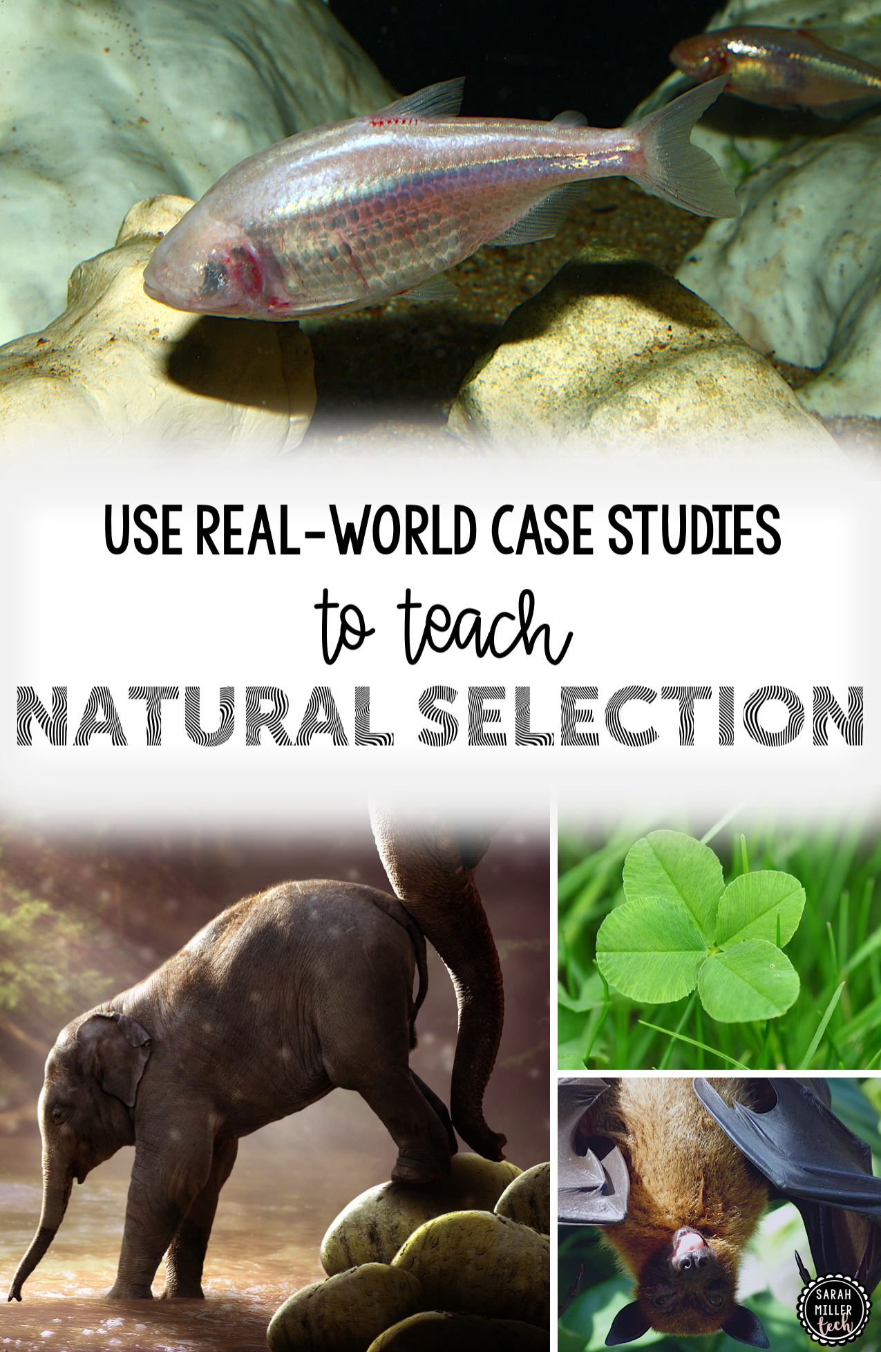 Science Reading Activity Natural Selection The Ivory