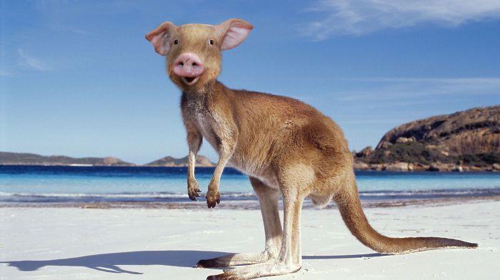 Funniest-photos-of-hybrid-animals-5   Love To Visit ...
