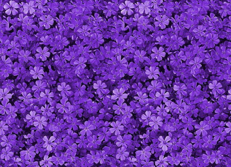 purple wallpaper small - photo #3