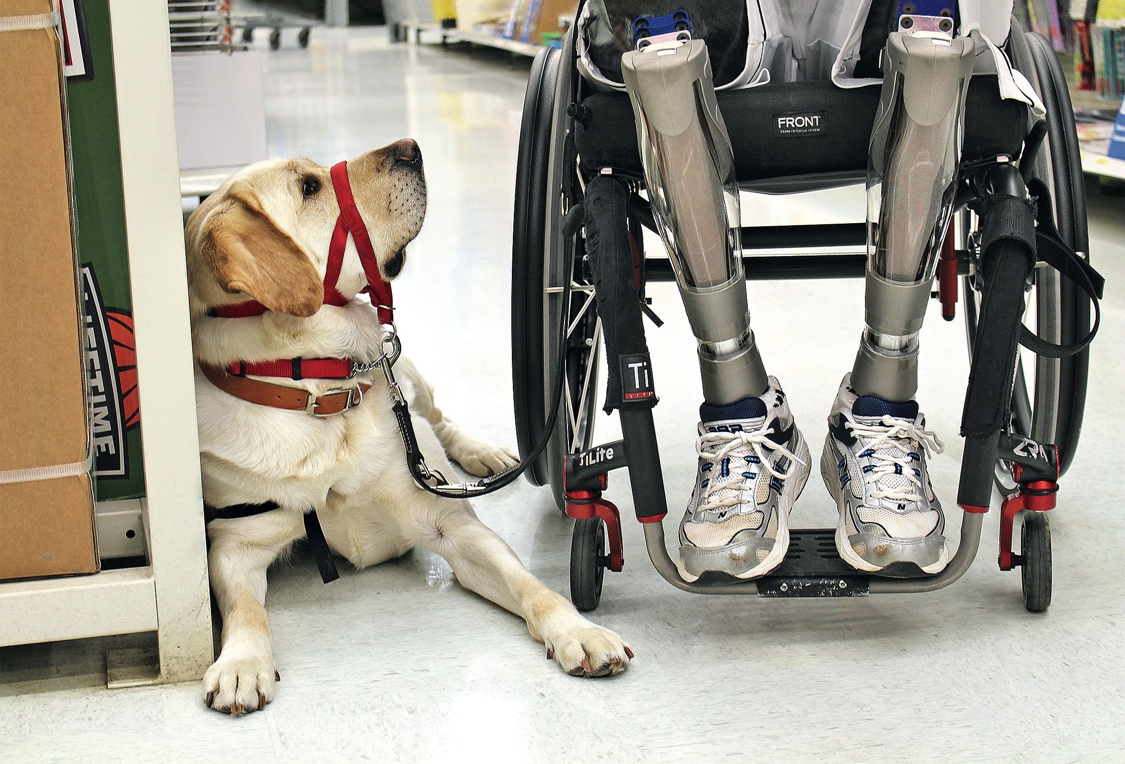 Great Canadians Cpl. William Goodwin Assistance dog