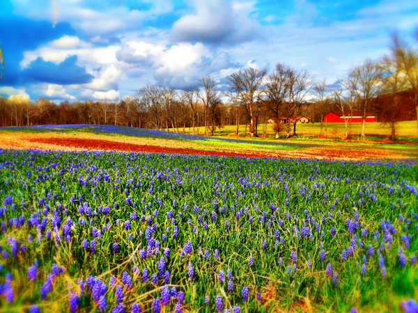 Spring Has Sprung In Carroll County Carroll County Landscape Services Spring Pictures