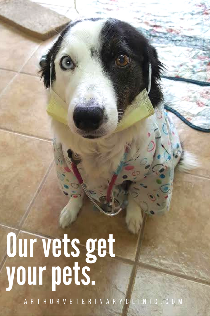 Our Vets Get Your Pets Especially Dr Pup Vet Animal Dog Costume Funny Puppy Veterinary Veterinarian Puppies Funny Dogs Work With Animals