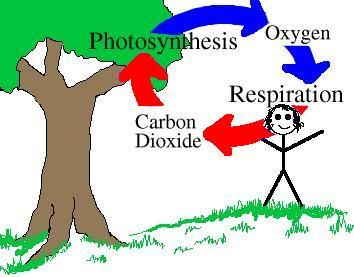 carbon and oxygen cycle worksheet | Almost all living things need ...