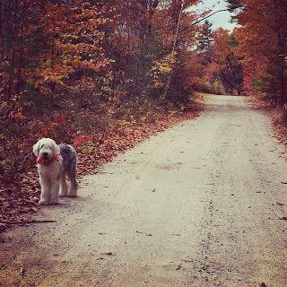 Changing season.  #dogslife #mylife #changeisgood #lifeisgood #dirtroads #mainehikes #fallcolors #lifeisgood