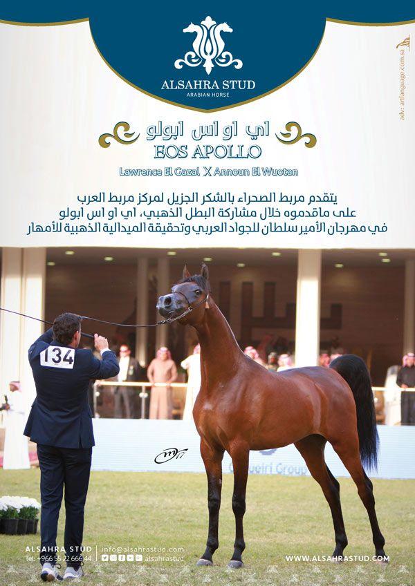 نادي الفروسية ي علن عن حفلة سباقه الـ41 يقيم نادي الفروسية حفلة سباقه الـ41 اليوم الجمعة ضمن فعاليات موسم سباقات الخيل في الرياض ل Horses Horseriding Animals