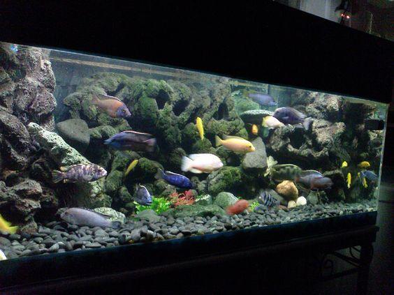 Turn tiles into a 3d fish tank background diy techblogger for Vivero para peces