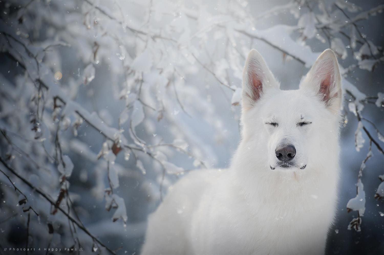 Pin By Bendale On White German Shepherd Dogs Part I Dogs Dog Poses Dog Photograph