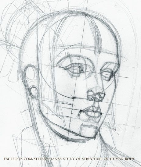 Study by StefanoLanza | The face | Pinterest | Human body, Anatomy ...