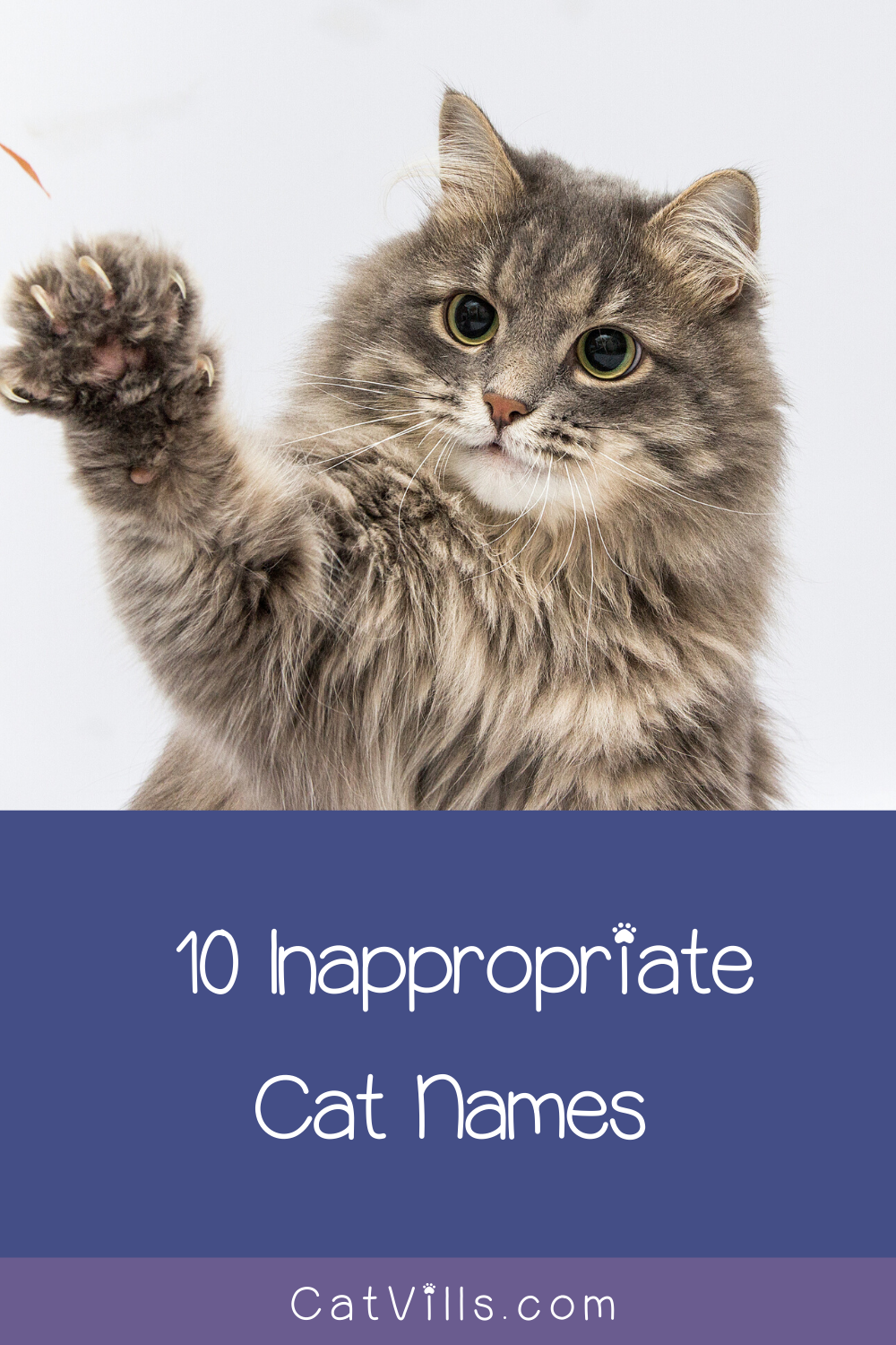 10 Inappropriate Names to Call a Cat Cat names, Cats