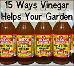 Get Rid Of Deer, Rabbits, Racoons, And Cats: These Animals Hate The Smell  Of Vinegar And It Will Keep Them Out Of Your Garden Naturally And Safely.  It Is.