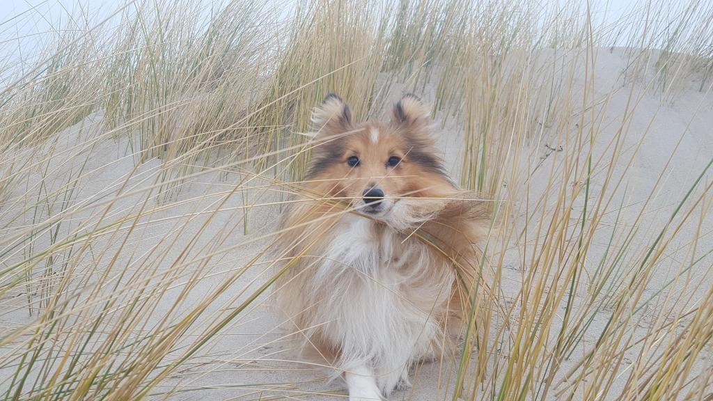 Flauschiger Hund Kuschlig Wie Ein Teddy Hund Mitbewohner