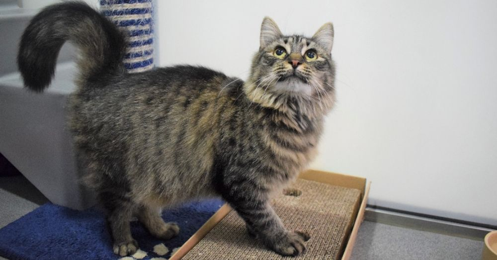 Shelter Workers Organize This Cat S Birthday Hoping Someone Will Adopt Her But No One Turns Up In 2020 Cat Birthday Cat S Cats