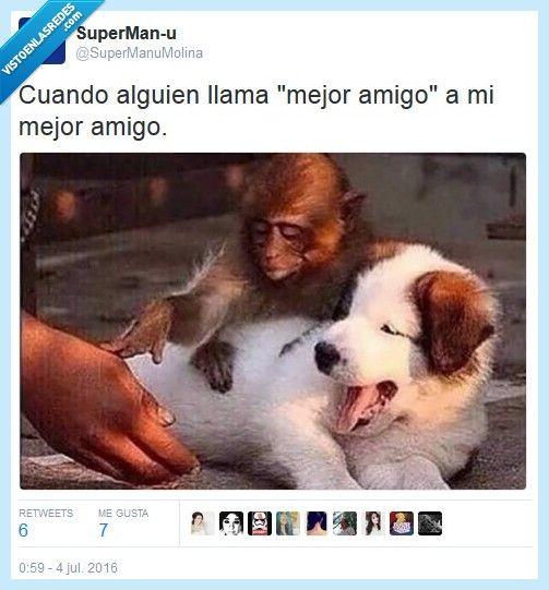 Es De Mi Propiedad Por Supermanumolina Imagenes Divertidas De Animales Humor Divertido Sobre Animales Humor De Perros