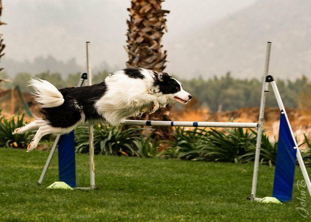 Dog Training Dog Training Dogtraining Puppytraining