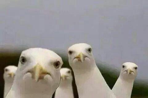 Photo Comments, Seagulls