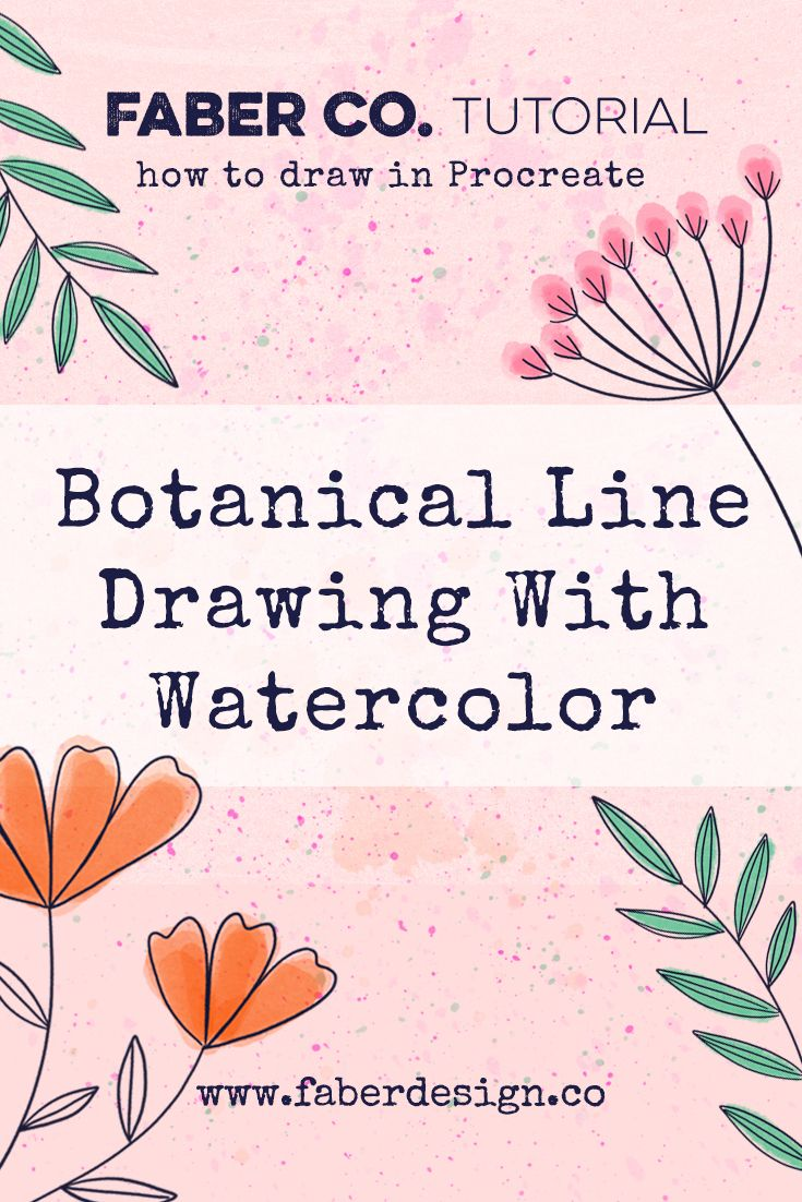 Learn how to draw botanical line drawing in Procreate