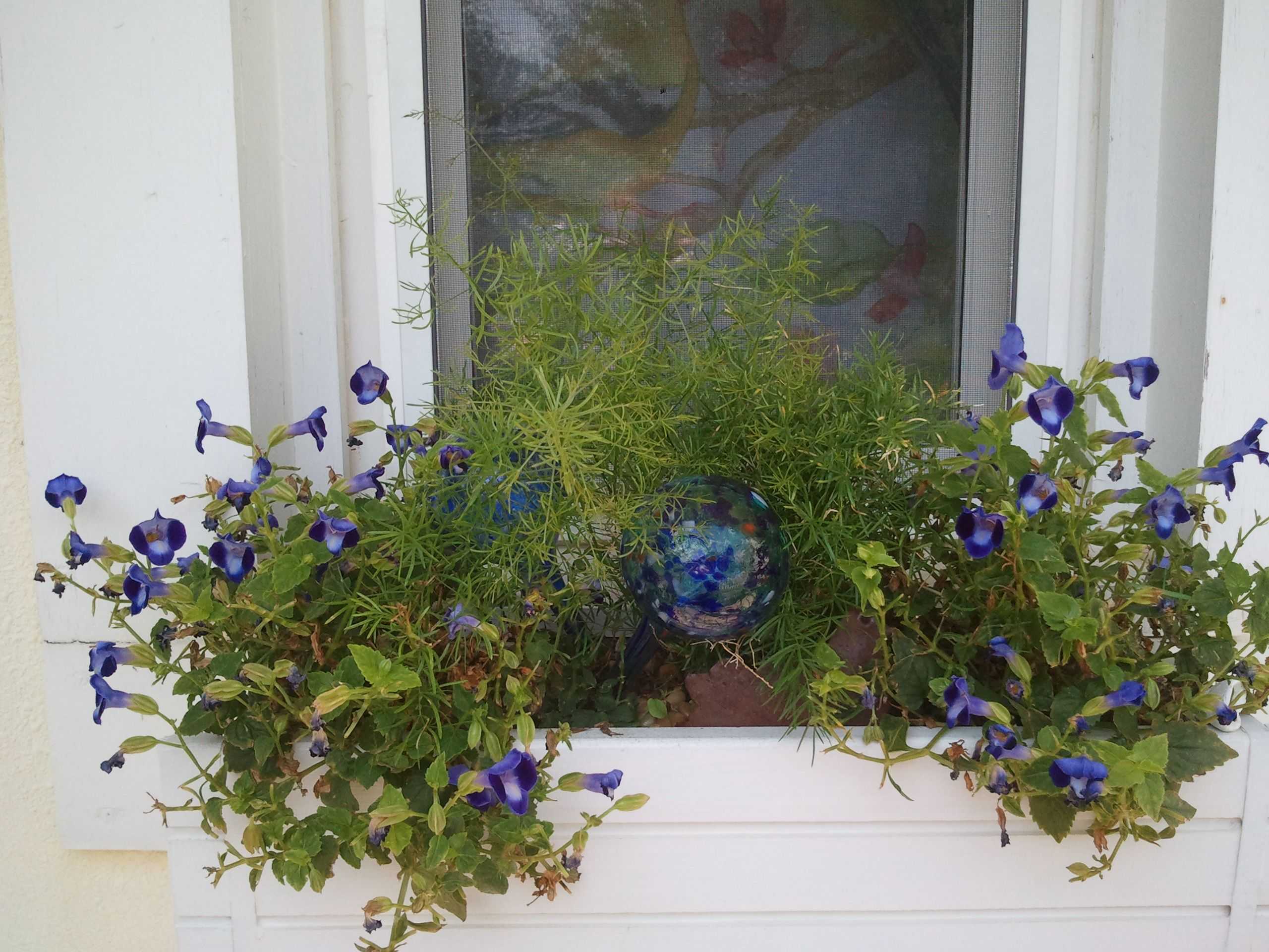 Window box ideas without flowers  window flower box  outside  pinterest  window flower boxes and