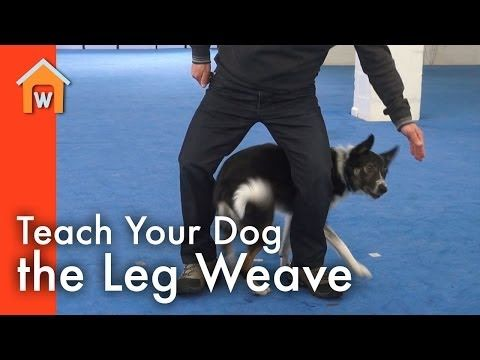 3 New Tricks To Teach Your Dog In The New Year Woofipedia By The