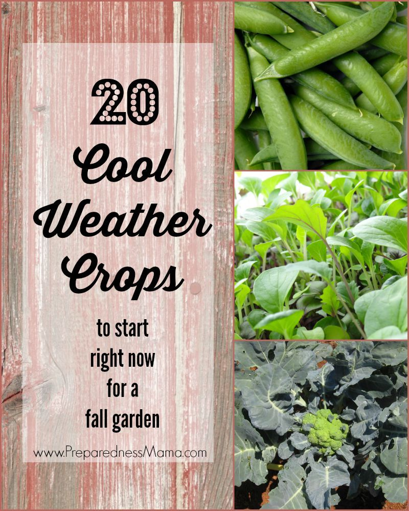 20 Cool Weather Crops To Start Right Now Fall Garden Vegetables Winter Vegetables Gardening Autumn Garden