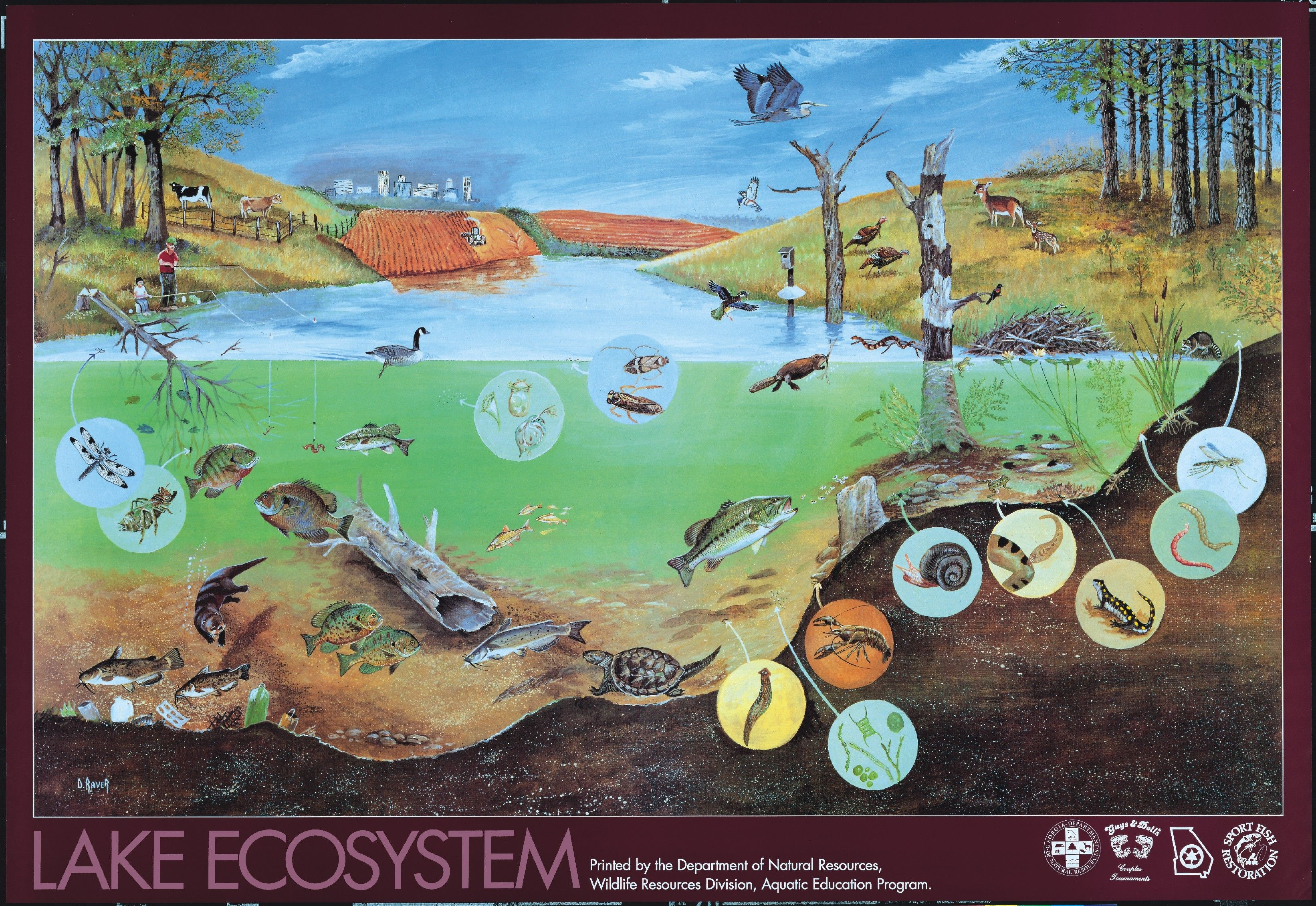 All Types Of Ecosystems Ecosystem A Community And Its Habitat An