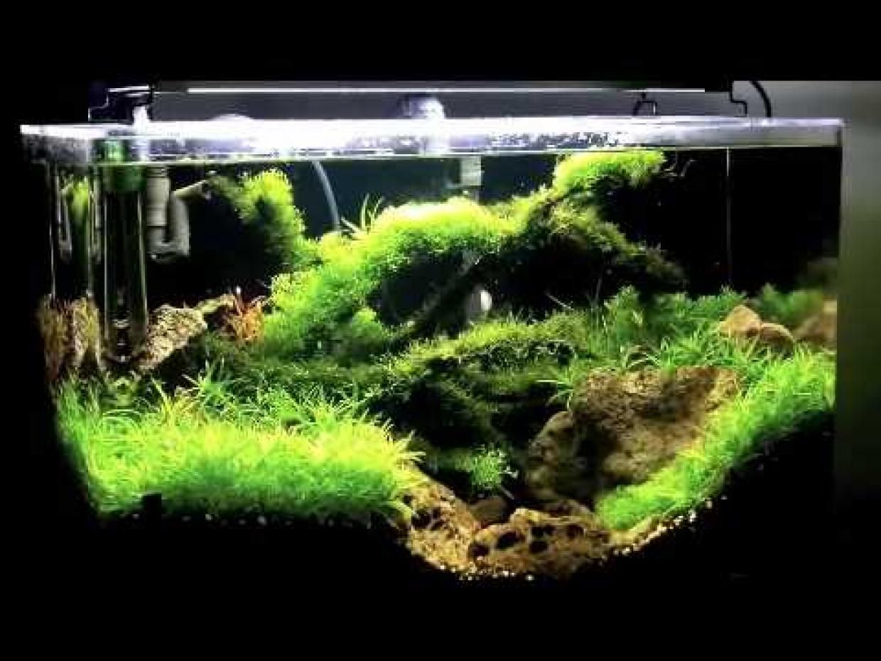 55 gallon planted tank with driftwood planted fish tanks for Planted tank fish