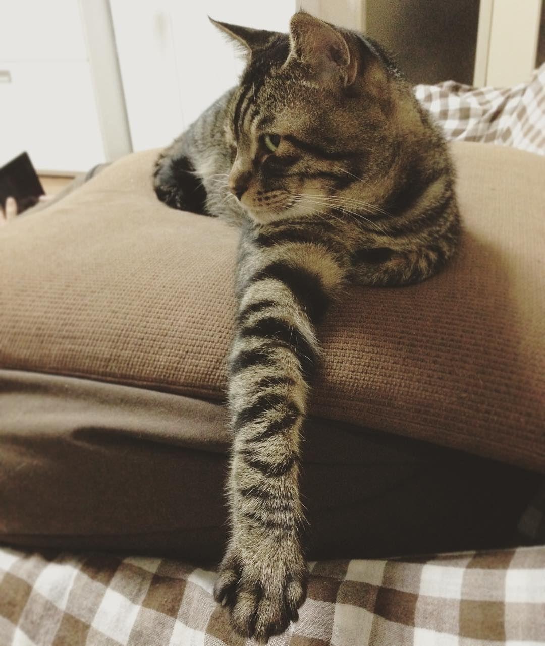 夜ムサシ誘う右脚Handshake? #musashi #mck #cat #キジトラ #ムサシさん by _daisy