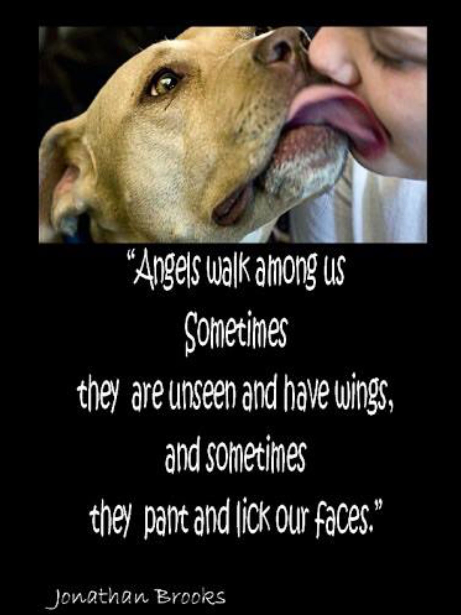 Love Animal Quotes Angels  Cats & Dogs  Pinterest  Angel Dog And Animal