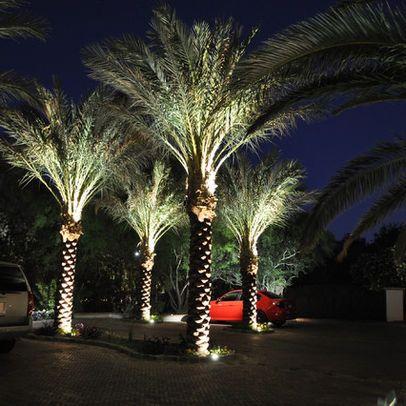 Palm tree uplighting home landscape pinterest for Landscape tree lighting