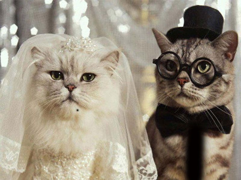 Cat Pictures to Download Free Wallpapers Download Funny