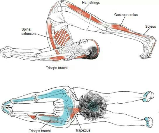 Pin by Kristin Williams on Massage Therapy | Pinterest | Yoga ...