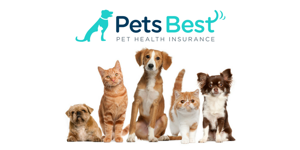 Pets Best Pet Insurance Review 2020 Update Embrace Pet Insurance Best Pet Insurance Cuddly Animals