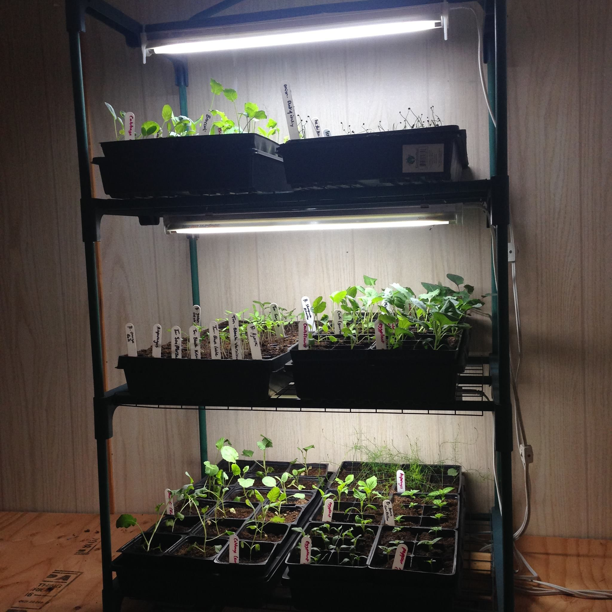 indoor greenhouse with lights on Grow Lights Indoor Greenhouses Family Food Garden Indoor Vegetable Gardening Indoor Greenhouse Modern Greenhouses