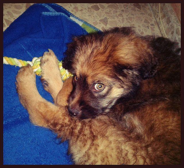 CASO EXTERNO - Este #cachorrito encontrado solito en la calle por fin ha sido #ADOPTADO