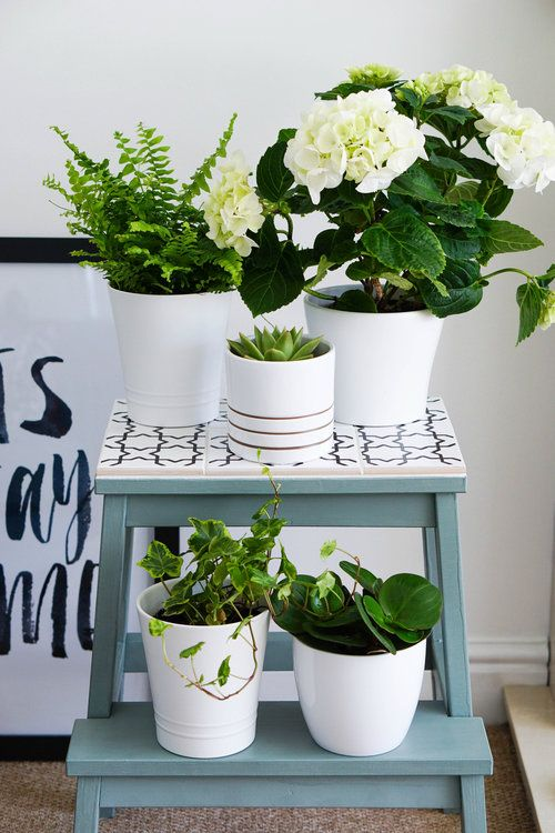 From Simple Stool To Pretty Plant Stand