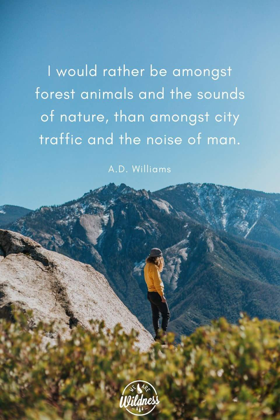Pin by Aly Hess on Adventure Quotes | Forest animals, True ...