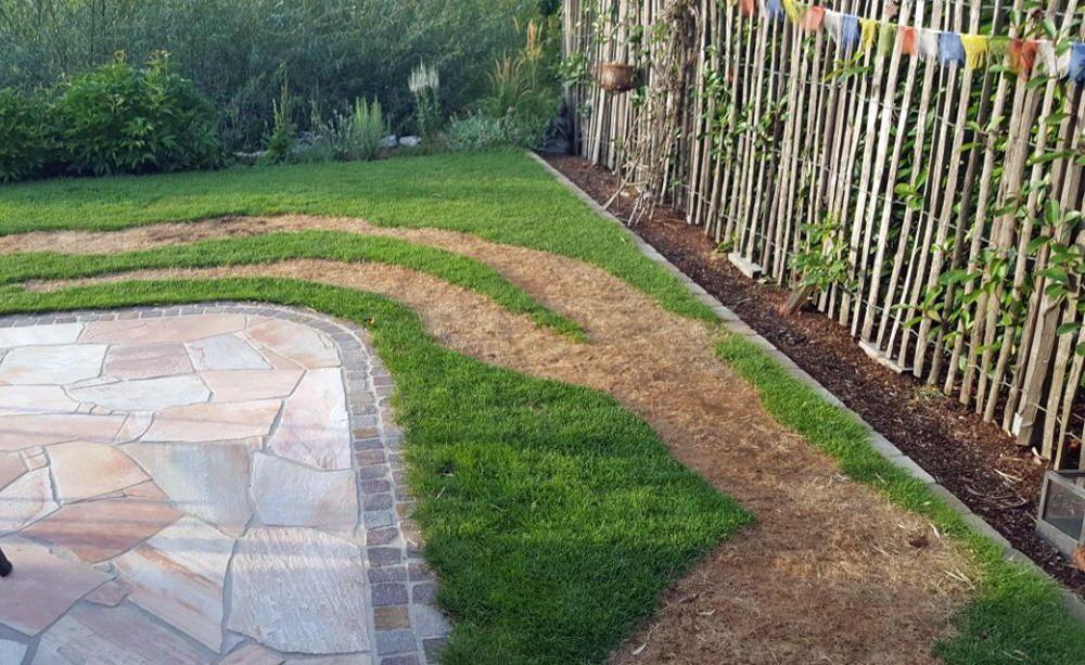 Rasen Uberdungt Das Sollten Sie Jetzt Tun Rasen Rasenpflege Teppich Grun