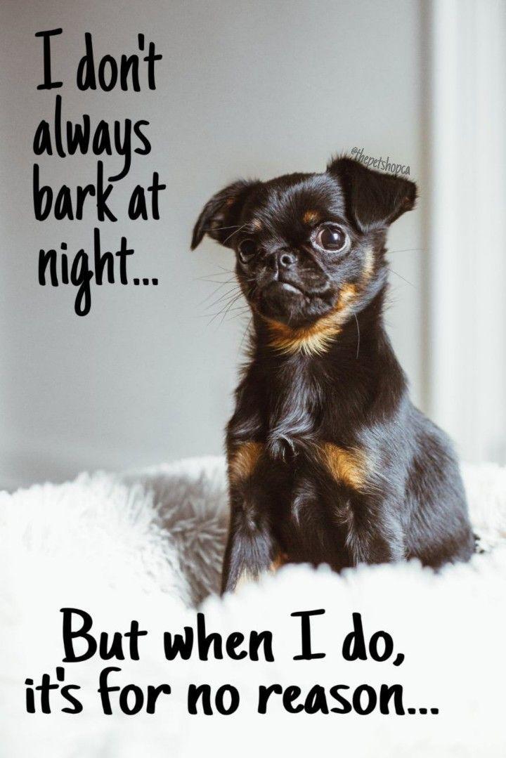 #dogmemes #animalmemes #petmemes #memes #funnypets #funnyanimals #funnydogs #funnymemes #dogs #doglovers #dogquotes #petquotes #animalquotes #funnyquotes