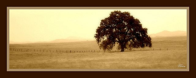 The Oak Tree By Johnny Ray Ryder Jr A Mighty Wind Blew Night And