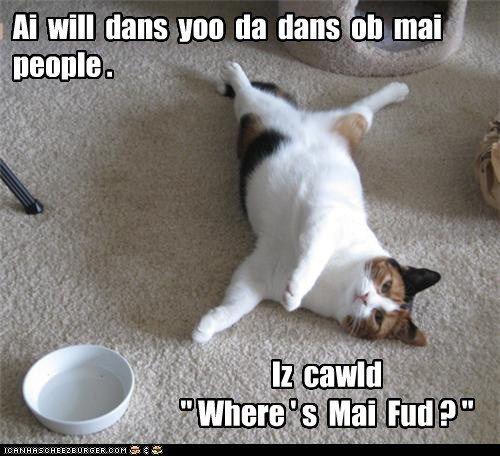Humiliating But Effective I Love Cats Funny Cats Cats
